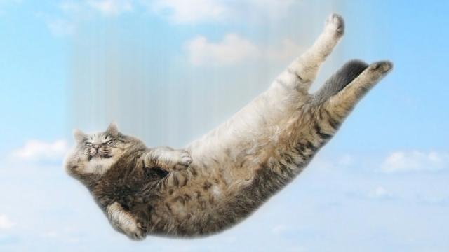 大貓小貓出糗瞬間!落水、失足、袋子套頭樣樣來~