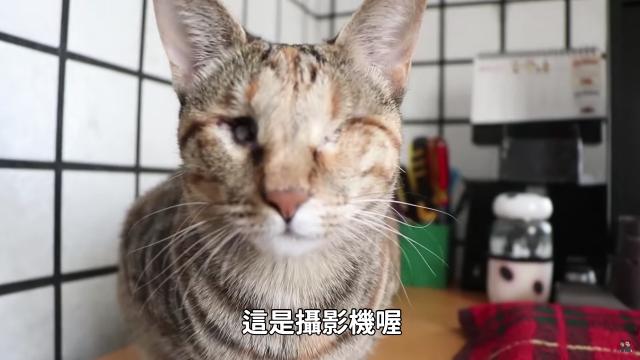盲貓的日常生活能自理嗎?