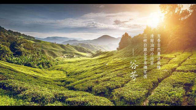 百年『谷芳有機茶園』碧螺春、蜜香紅茶遠近馳名|冷熱皆宜