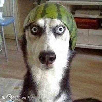 藍瘦香菇~狗狗的出糗直擊!!!