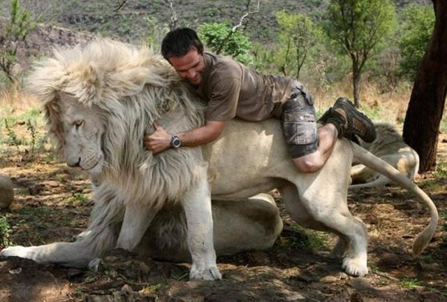 叢林野獸【獅子王】其實也是有非常可愛有趣的一面呢!
