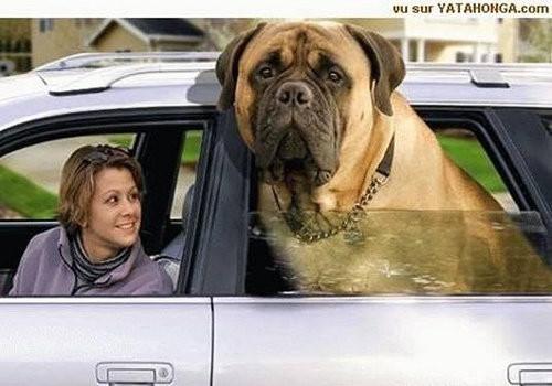 我的天!世界上最大的狗