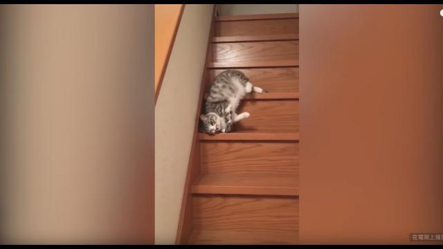 貓狗特殊下樓梯法!搞笑大公開!