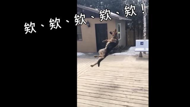 動物跳躍搞笑集!
