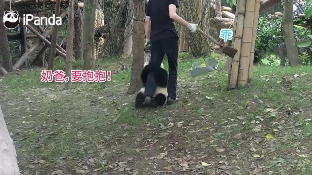 熊貓大型討抱抱現場~