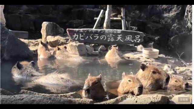 天氣冷!動物們泡湯去~