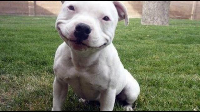 【跌破眼鏡】狗狗「比特犬」其實是面惡心善,守護力爆棚!