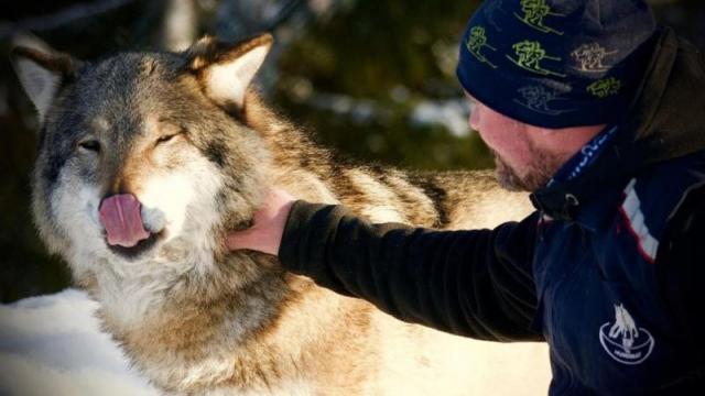 這不是狗狗!這是狼呀~!!狼與人的可愛互動~~~