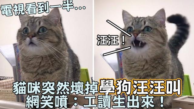 電視看到一半...貓咪突然壞掉「學狗汪汪叫」網笑噴:工讀生出來!