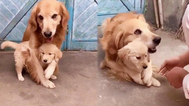 【每週萌物】母愛之心不分種族,保護小孩的動物媽媽們