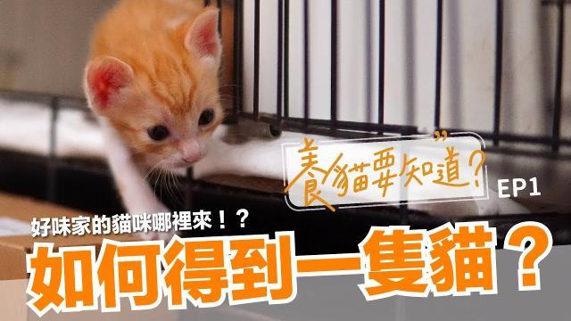 【養貓要知道EP1】如何得到一隻貓?撿到貓?貓中途領養?收容所認養?|貓奴新手指南